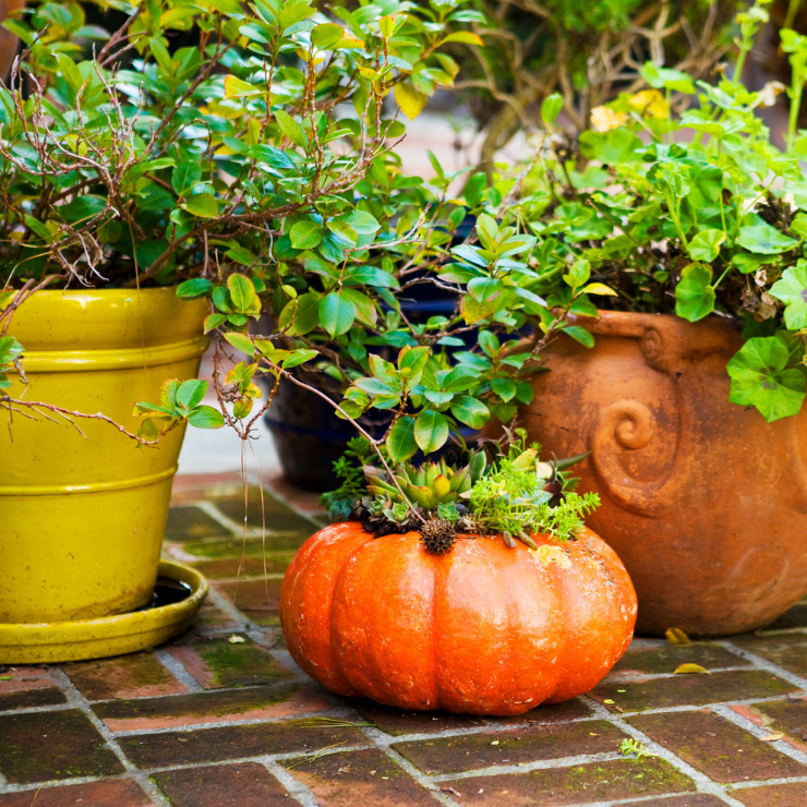 Face masks, pet treats and other ways to reuse your pumpkin